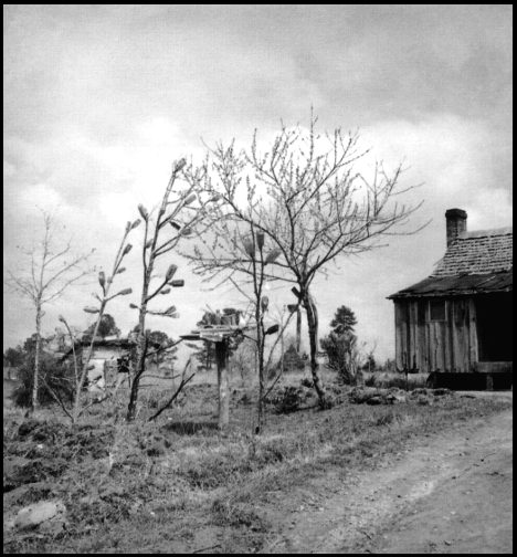 House with Bottle Trees, by Eudora Welty, WPA photos